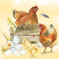 Napkin 25 Breeding Chicken
