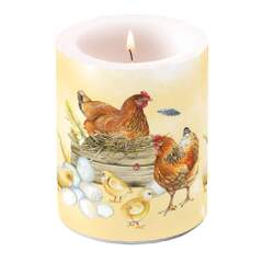 Candle Big Breeding Chicken